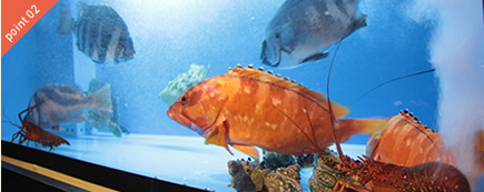 いけすからの新鮮な魚介類